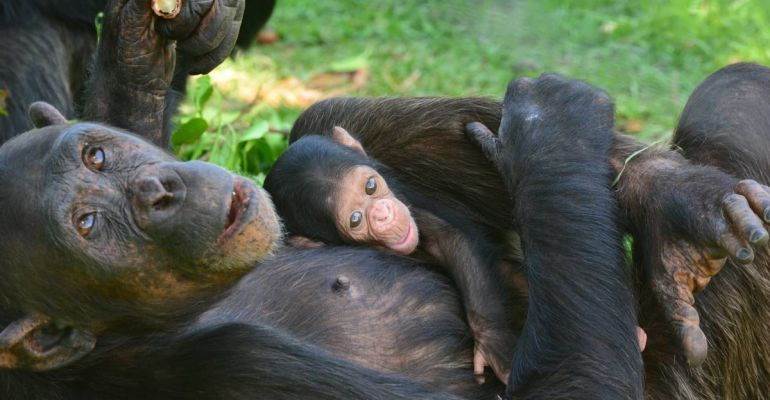Jane Goodall Institute Chimpanzee Tour from R 255 - Book ...